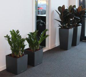 Planteservice